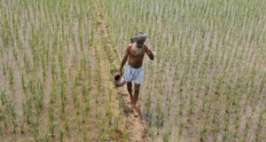 742289-agriculture-pti